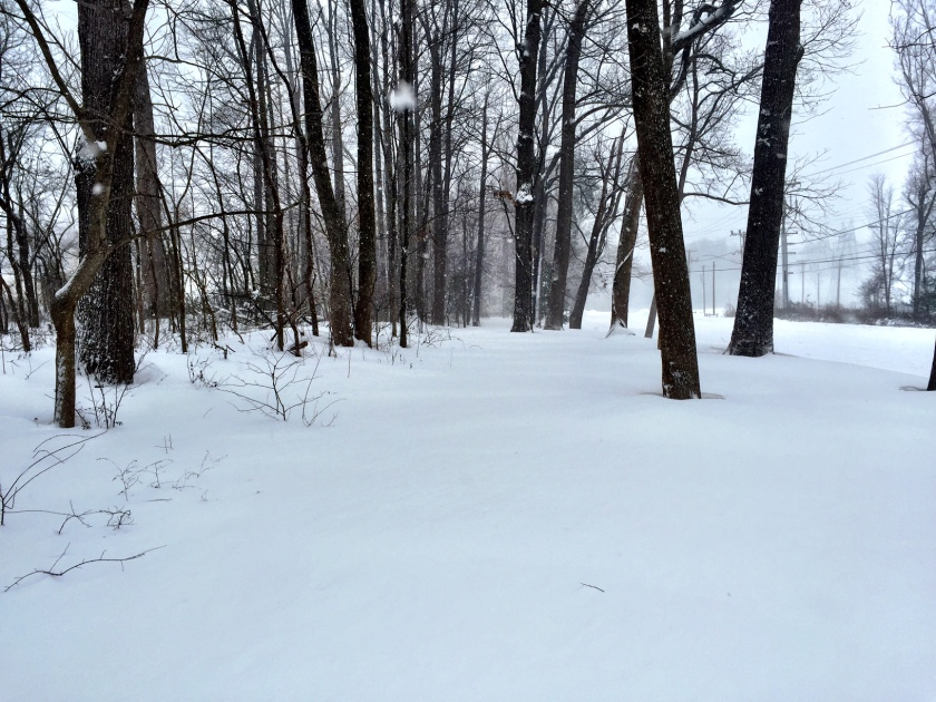 This is the trail I normally run on. The snow came up to my knees.